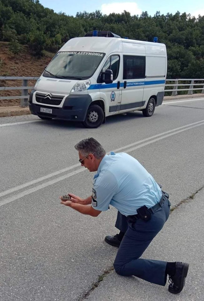 Αστυνομικός στην Καστοριά έσωσε χελωνάκι