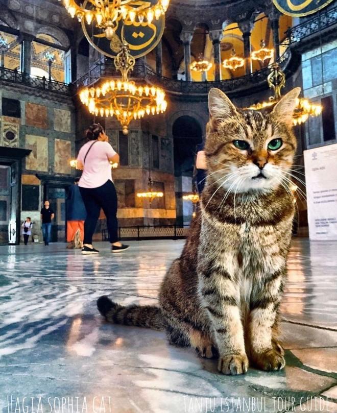H γάτα της Αγιάς Σοφιάς