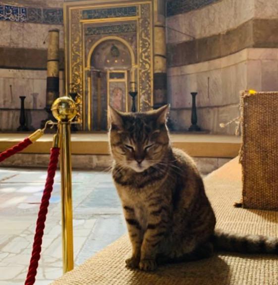 Αγιά Σοφιά γάτα