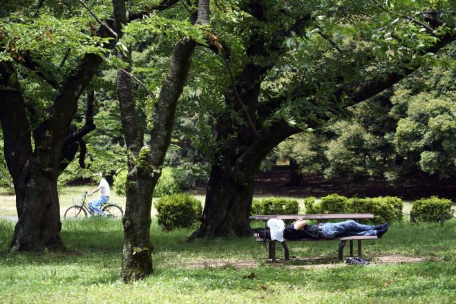 Ιαπωνία δέντρα