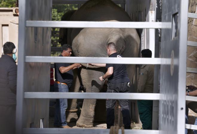 απελευθέρωση Ελέφαντα