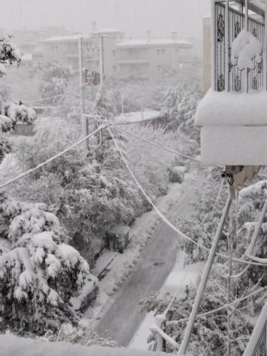 Μελίσσια Χιόνι