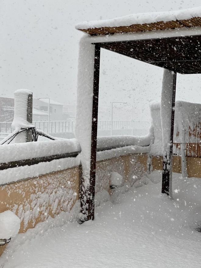 Γέρακας Χιόνι