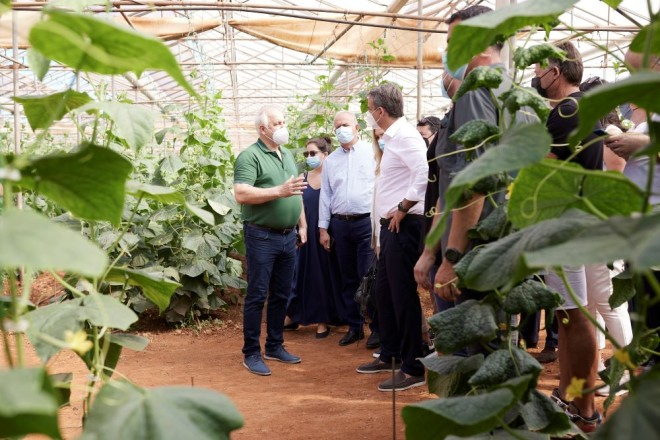 Ο Κυριάκος Μητσοτάκης σε καλλιέργειες στην Πελοπόννησο