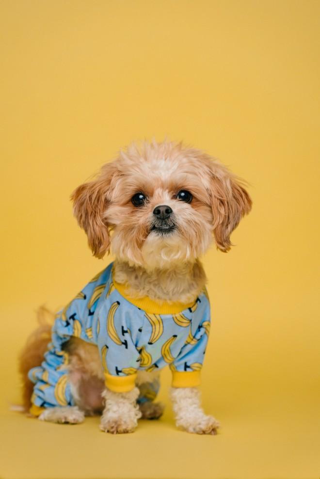 Παγκόσμια Ημέρα Σκύλου