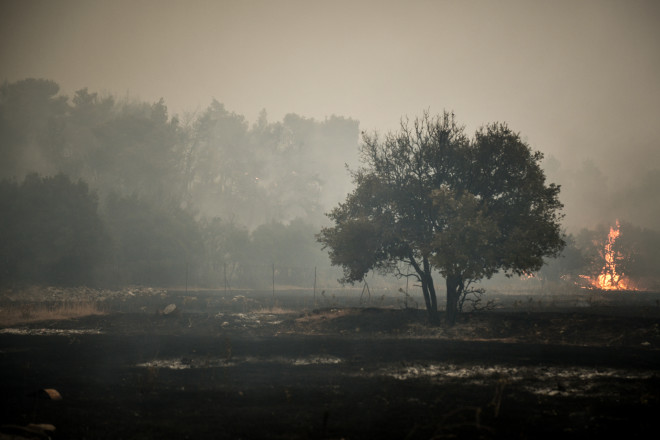 Φωτιά σε δασική περιοχή στα Βίλλια