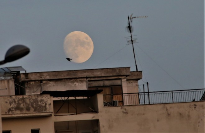 Φεγγάρι Καλαμποκιού