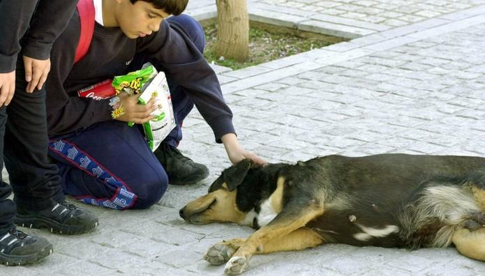 Επικήρυξαν με 1.000 ευρώ δράστη που σκότωσε τρία σκυλιά