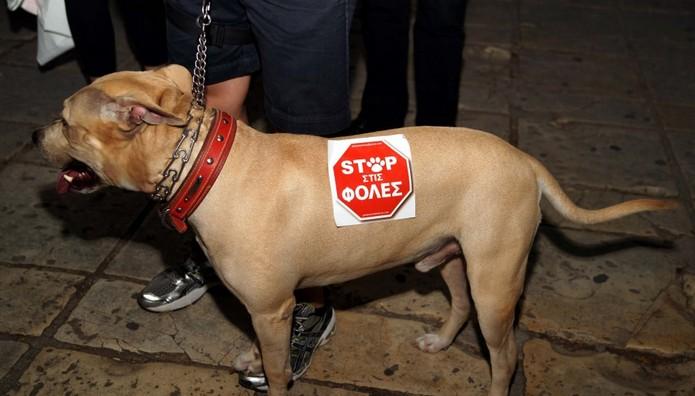 Οι δολοφόνοι χρησιμοποιήσαν φόλες και σκότωσαν 4 σκυλιά