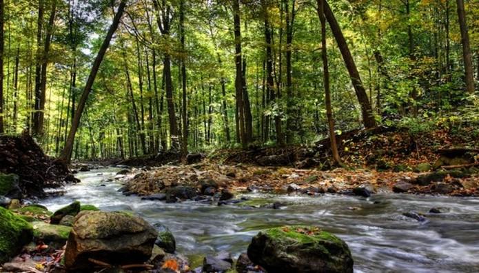 Σε τι διαφέρει το Οντάριο από τα αλλα δάση