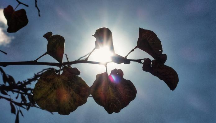 Άνθη και ουρανός με ήλιο λάμπει