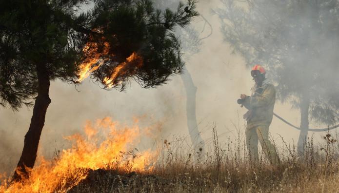 σειχ σου δασος πυρκαγια