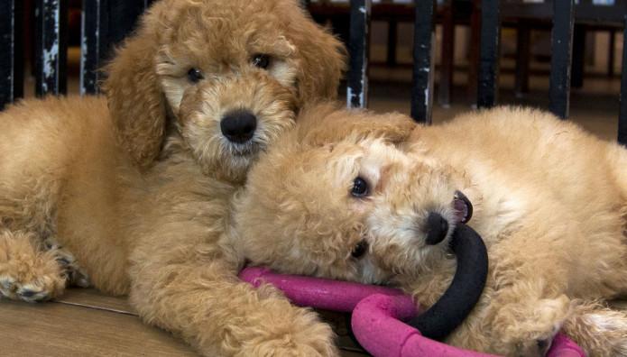 Όμορφα σκυλάκια