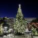 Το χριστουγεννιάτικο δέντρο στο Σύνταγμα